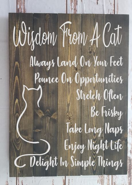 240 - Wisdom from a Cat